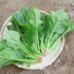 趣味どき カラダ喜ぶベジらいふ第7回青菜らいふ ほうれん草のレシピ